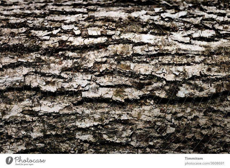 Horizontal bark tree wood Nature Forest Exterior shot Brown Environment natural Gray Consistency Timber