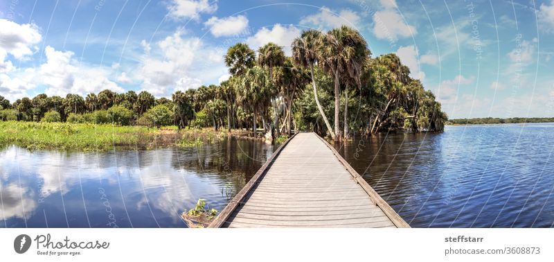 Boardwalk overlooking the flooded swamp of Myakka River State Park journey pathway bench Sarasota Florida nature view tranquil blue sky clouds panoramic