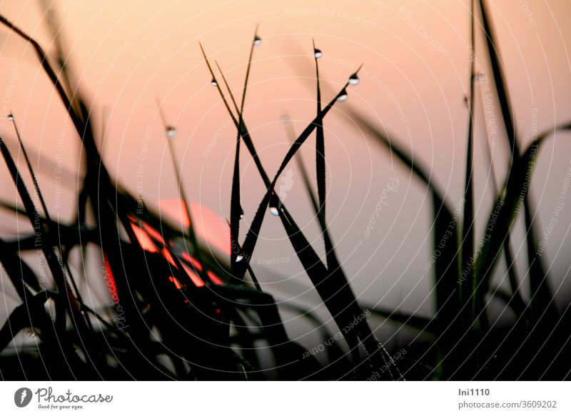 Sunrise in morning mist with grasses and dew drops Sunrise - Dawn October steamy Misty atmosphere Fog Hazy Pink Fireball Ambience atmospheric Gray