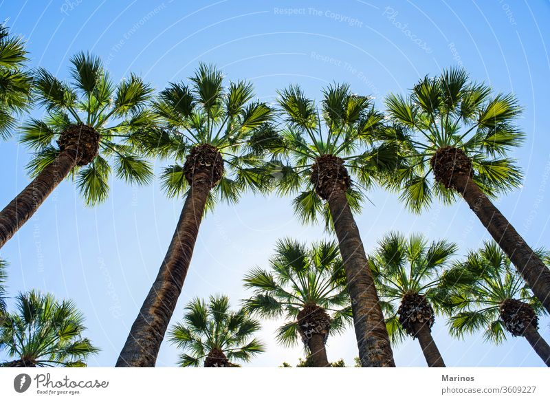 palm trees background old summer sky travel blue nature vacation style landscape southern outdoor scenic sunlight tropical holiday tourism athens garden