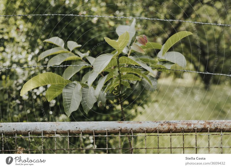 garden fence Garden Wire netting fence Nature shot out Garden fence green nature conservation nobody Fence Exterior shot Deserted bushes Plant Colour photo