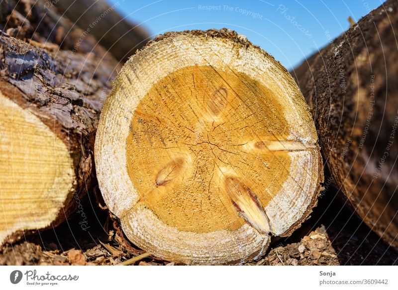 A felled tree trunk with annual rings, close up, blue sky Tree trunk Annual ring cut down tree Blue sky Close-up wood Nature Exterior shot Brown Tree bark