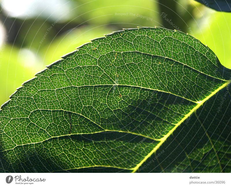 Green Leaf Vessel Prongs Rose leaves