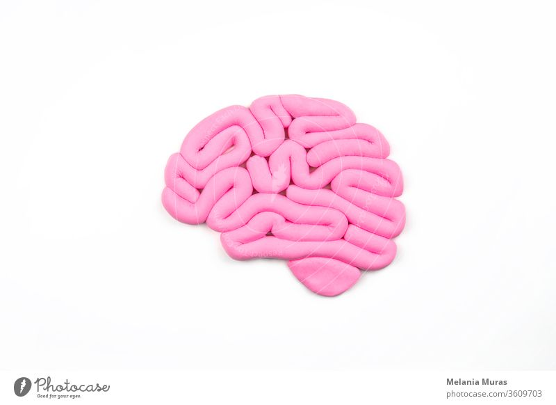 Model of pink human brain on white background. Profile view, flat lay. Intelligence concept. abstract anatomy artificial intelligence biology brain cancer