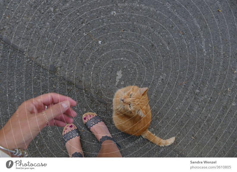 "Neighbourhood cat ""Benny"" Cat hangover Trust Love Love of animals cat keeping feeding Understanding entertainment Affection Animal owners"