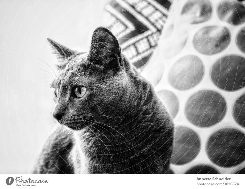 Cat Portrait Animal portrait Neutral Background Interior shot Black & white photo Contentment Pet Elegant Esthetic