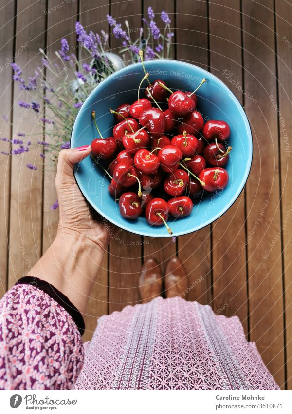 Freshly picked cherries ready to eat Summer fruit Delicious Sweet Food Healthy Juicy Red Mature Organic Nature Harvest green Agriculture Garden Exterior shot