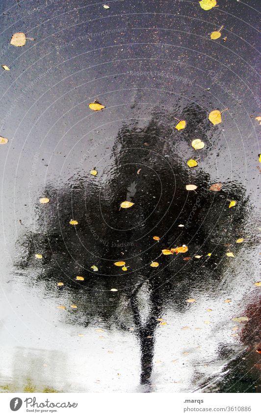 Autumn in summer Reflection Asphalt tree flaked Wet Hazy