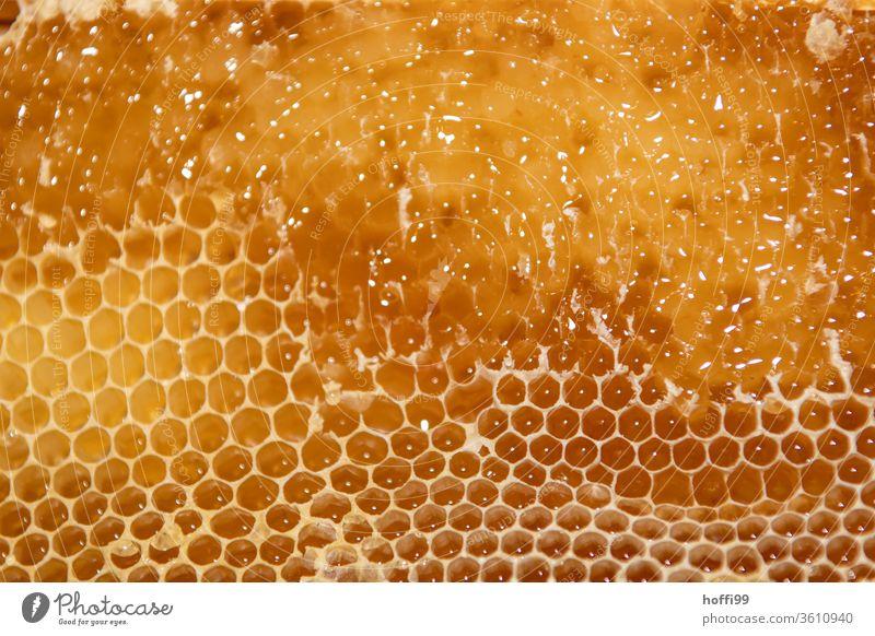 opened honeycomb with rape seed before spinning Bee-keeping Bee-keeper keep beekeepers Honey honey production organic farming ecologic Honey bee Food Healthy