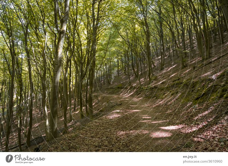 Hiking trail through a beech forest Forest forest path Beech wood Deciduous forest deciduous trees Book shady Shadow Light and shadow Summer spring Seasons