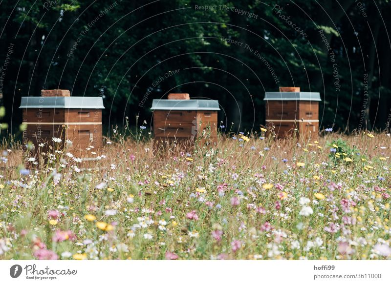 Beehives on flowering willow Bee-keeping Bee-keeper keep beekeepers Honey honey production organic farming ecologic Honey bee Food Healthy Summer Apiary Nature