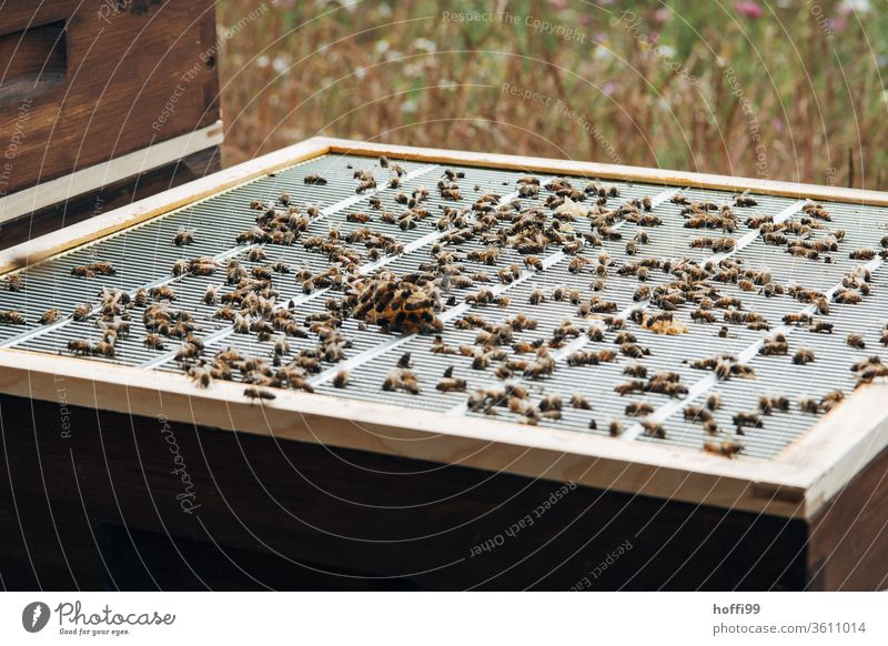 View of an open beehive with end grid and honeycomb growth Bee-keeping Bee-keeper keep beekeepers Honey honey production organic farming ecologic Honey bee Food