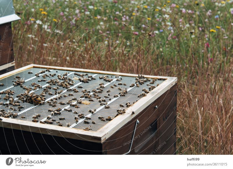 View of an open beehive with end grille Bee-keeping Bee-keeper keep beekeepers Honey honey production organic farming ecologic Honey bee Food Healthy Summer