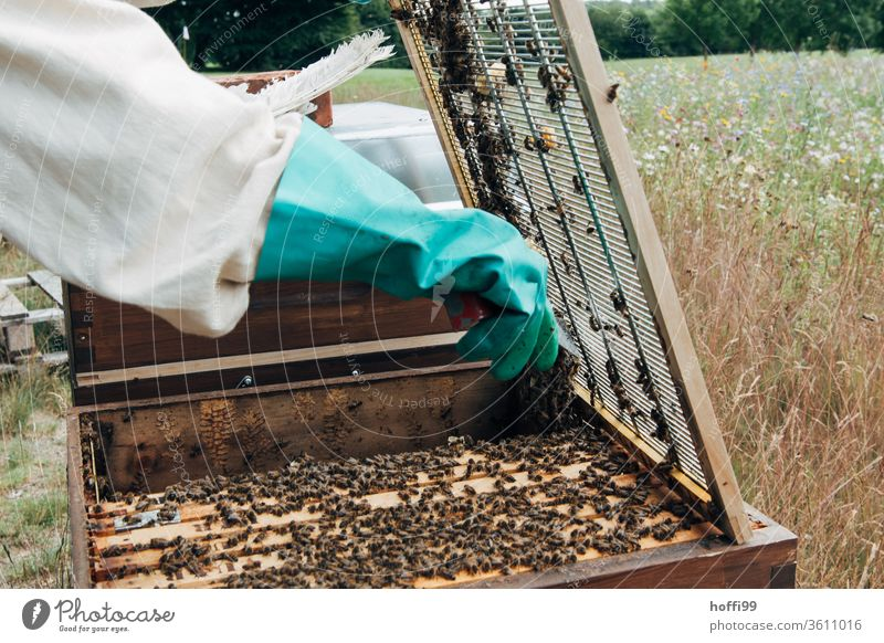 Beekeeper opens the closing grid to the honey room Bee-keeping Bee-keeper keep beekeepers Honey honey production organic farming ecologic Honey bee Food Healthy