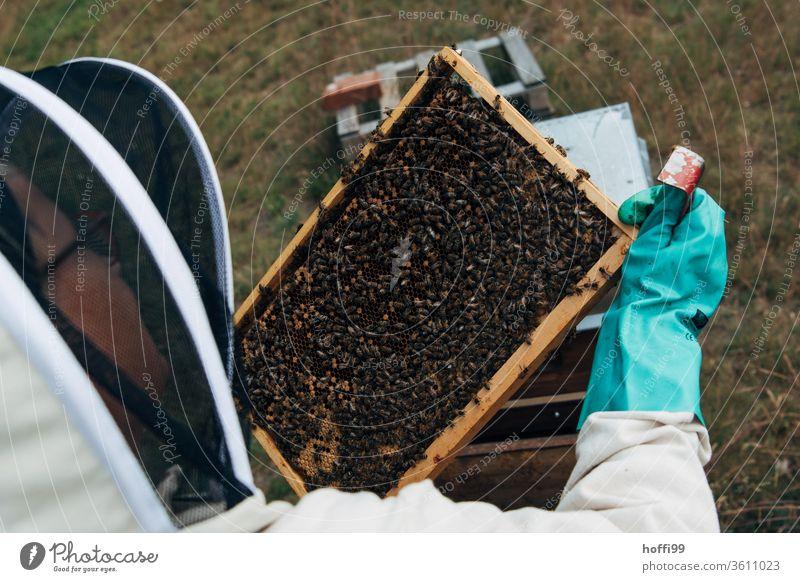 Sighting of the honeycombs Bee-keeping Bee-keeper keep beekeepers Honey honey production organic farming ecologic Honey bee Food Healthy Summer Apiary Beehive