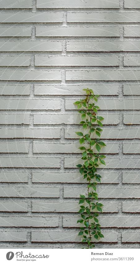 Strength Nature Power Stone Green To break (something) Plant Close-up Growth resistance power of nature Determination Brave Success Foliage plant Environment