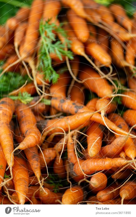 Heap of carrots Marketplace Organic produce Vegetable Vegetarian diet Vegan diet Food Nutrition Fresh Healthy Delicious Lunch Dinner Salad Fasting