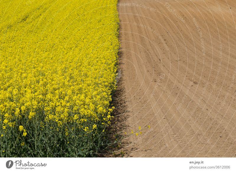 half rape field and half field Canola Canola field Oilseed rape flower Oilseed rape cultivation rapsfeld. oeko acre Agriculture Field fields Arable land