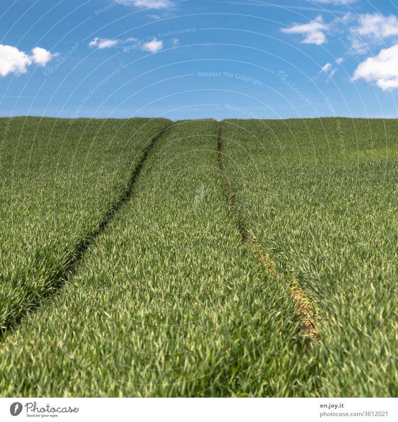 Tractor track in a cornfield to the horizon Cornfield Wheatfield Grain Grain field Agriculture agrarian extension Horizon hillock okö green Sky Growth Climate