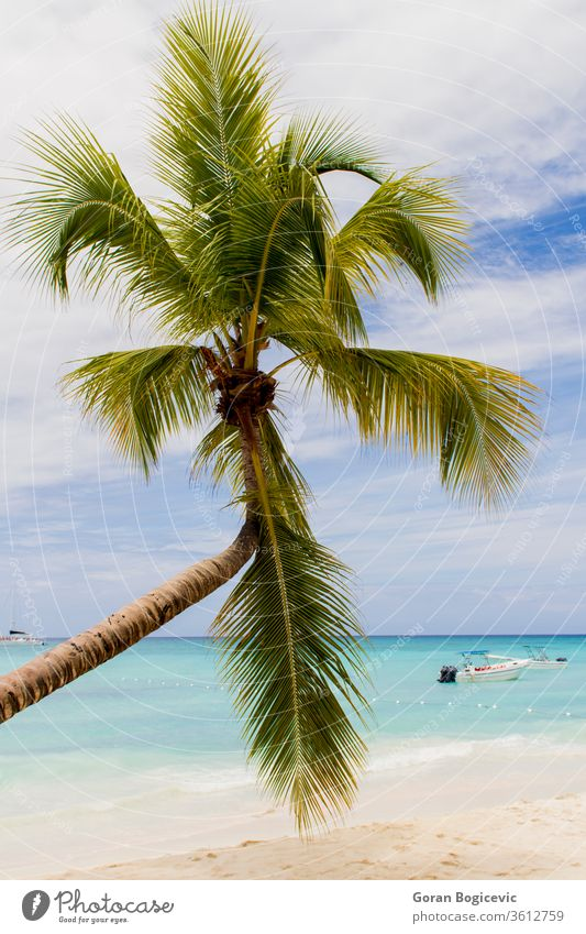 Tropical beach dominican sky travel blue tropical paradise water ocean sea coast sand vacation caribbean wave summer island nature palm landscape scenic shore