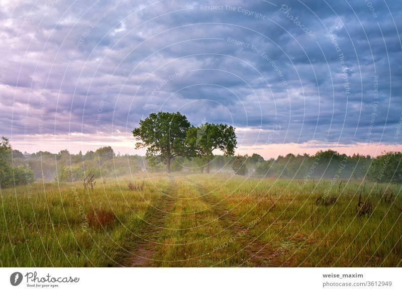 Country road green fields. Oak trees in morning fog summer landscape sunrise dawn oak nature season meadow mist rain overcast grass background sunlight leaf