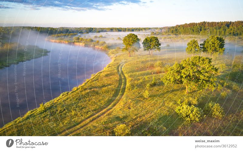 Sunlight on large oak trees grove in morning. Aerial view fog summer landscape sunrise dawn sunlight mist aerial nature green meadow river riverbank water road