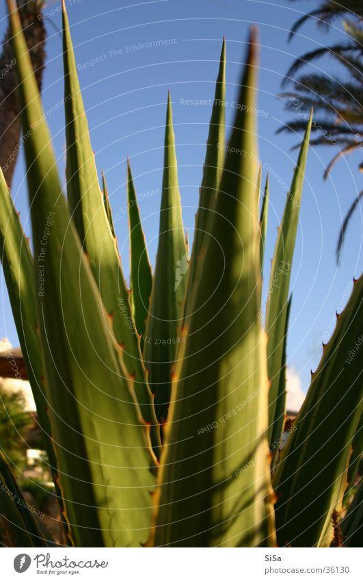 Flower Plant Aloe