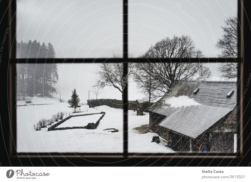 View of the snow-covered farm December Holidays in winter Black Forest Subdued colour Calm Gray Day Weather Shallow depth of field Environment Landscape