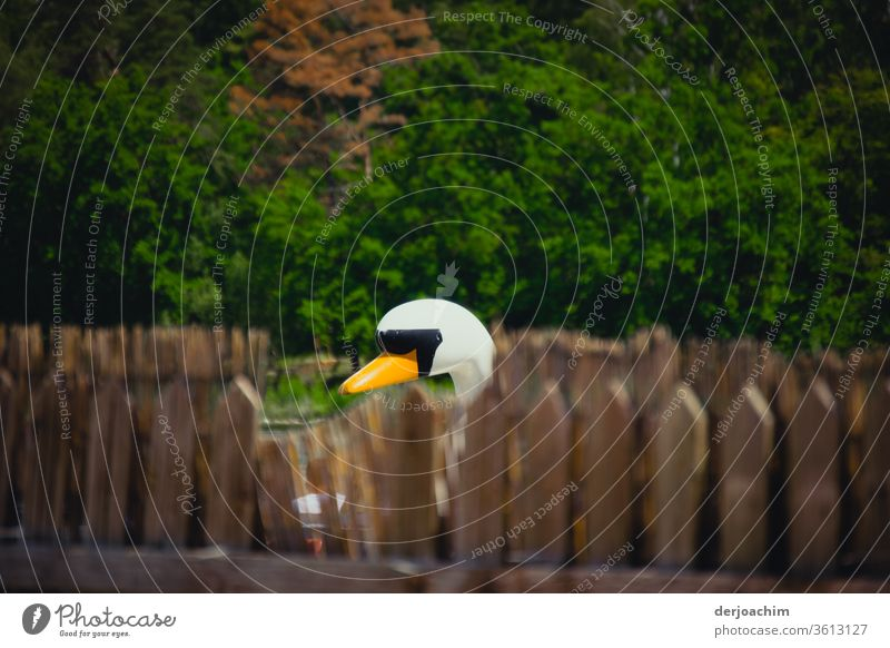 A wooden swan looks behind fence posts to see if the photographer has already left, with trees in the background. Swan Beak Animal White pretty Bird