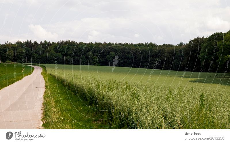 A green landscape within the Ruhr area. Field Forest Street Still Life Nature Summer Meadow Sky Landscape Environment hillock tranquillity Grass Shadow Light