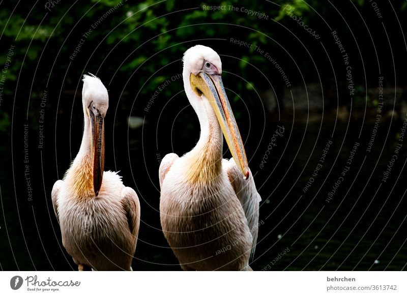 """""""Well, have you seen any fish today?"""" """"yes, but only briefly!"""" Close-up Animal portrait Sunlight Contrast Exterior shot Nature Wild animal Bird White"""