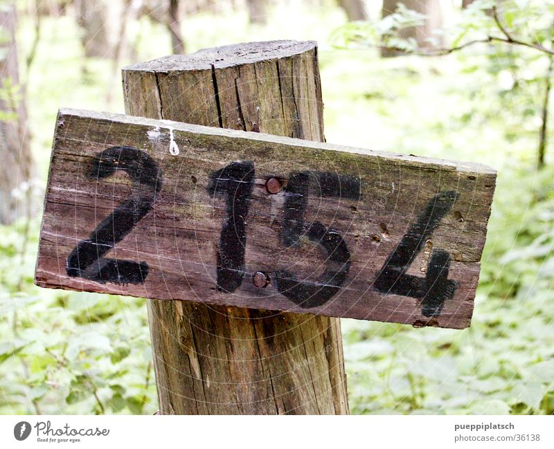 Tree Green Forest Wood Digits and numbers Wooden board Nail Bird droppings