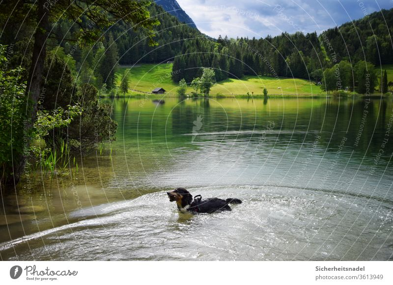 Dog in the lake Lake mountain lake Bavaria Alps Water Landscape Colour photo Vacation & Travel Nature Mountain Exterior shot Summer Deserted Day Relaxation