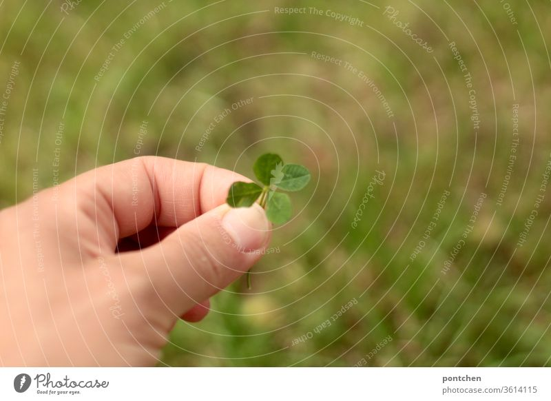 Trying to force the luck. To forge your own happiness! Hand holds a four-leaf clover. One leaf is held in addition. Cloverleaf stop three-leaved cloverleaf