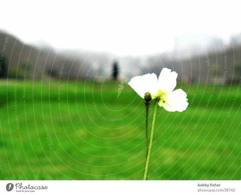 solitaire Flower Plant Park Green Paris Bright Loneliness