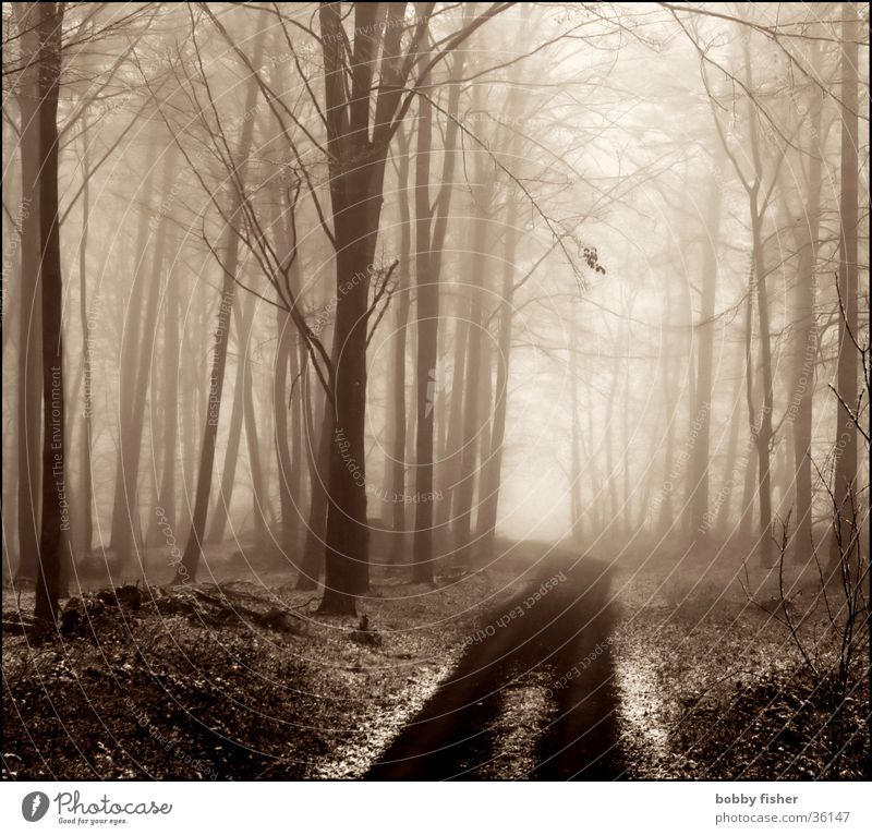 light comes Forest Fog Tree Cold Winter Grief Light Sadness Lanes & trails