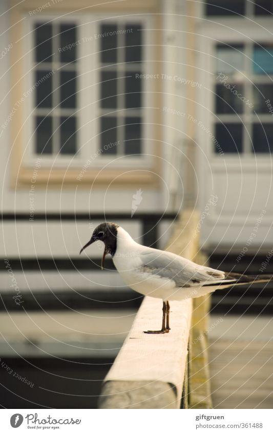 I'm just saying... Animal Wild animal Bird Seagull Black-headed gull  1 Scream Feather Beak Eyes Sea bridge Excitement Handrail Rant Window Coast Ocean Grumble