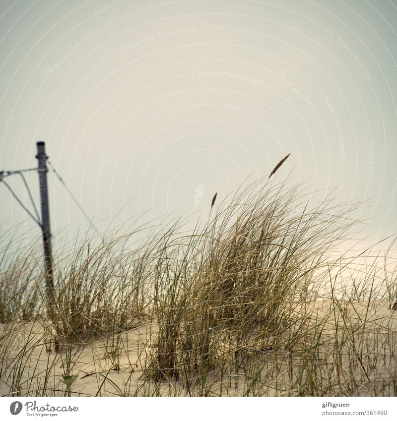 Green electricity Environment Nature Landscape Elements Sand Plant Grass Foliage plant Coast Beach Dark Electricity Electricity pylon Dune Marram grass