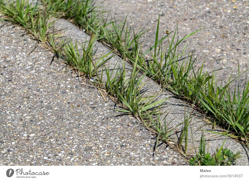 Green grass sprouts at the junctions of an asphalt road action background block closeup concrete crack design destination energy environment future gray green