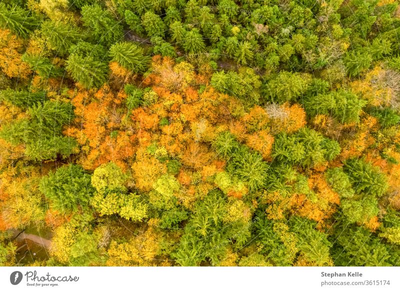 Vertical view of autumn forest scene with green, red and yellow colored trees. aerial fall drone contrast nature travel scenic beautiful natural colorful