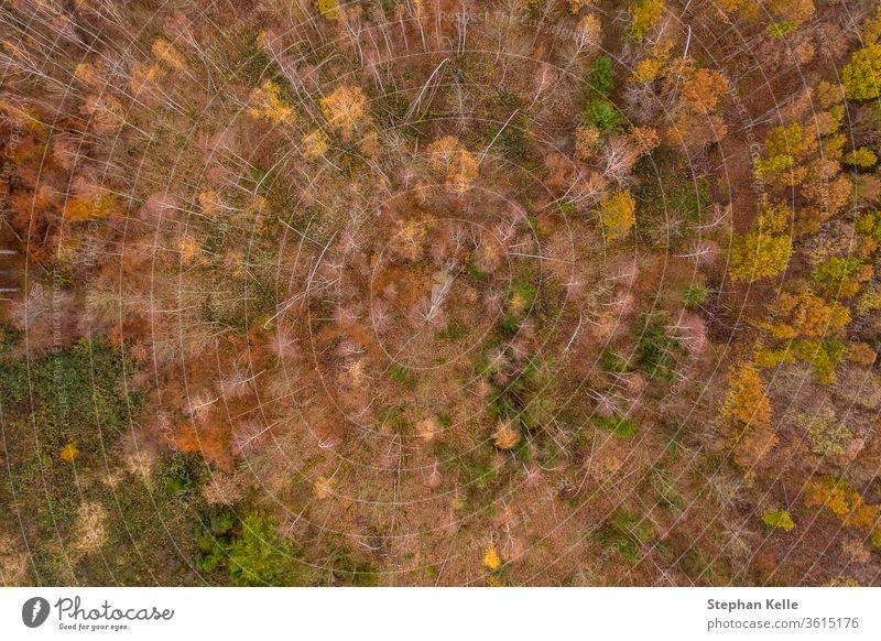 Late autumn over a orange forest in aerial view from a drone. summer sun light tree park nature landscape green background travel fall beautiful golden