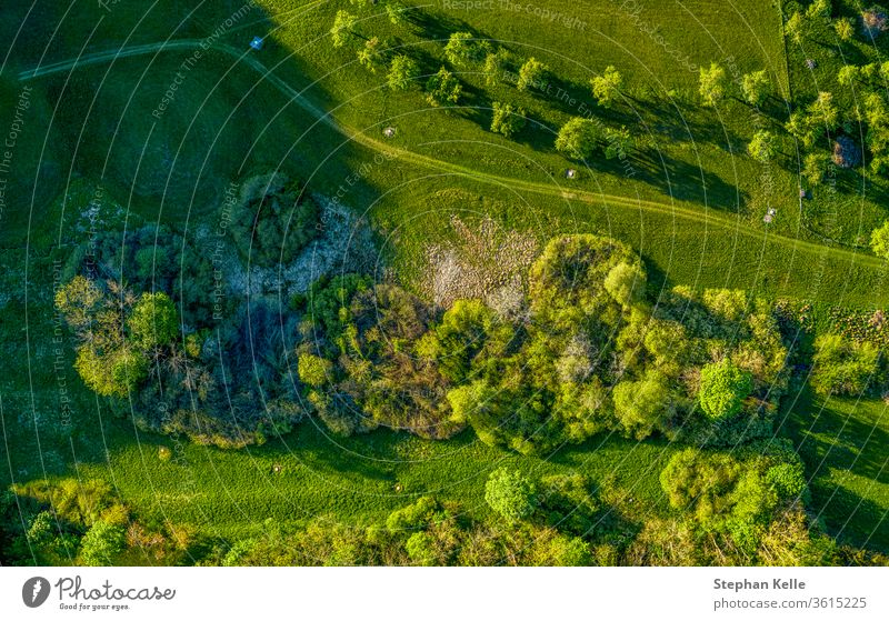 Drone shot at a green countrysided path through grassy meadows, where you can enjoy a healthy walk at the fresh air. drone tree nature landscape environment
