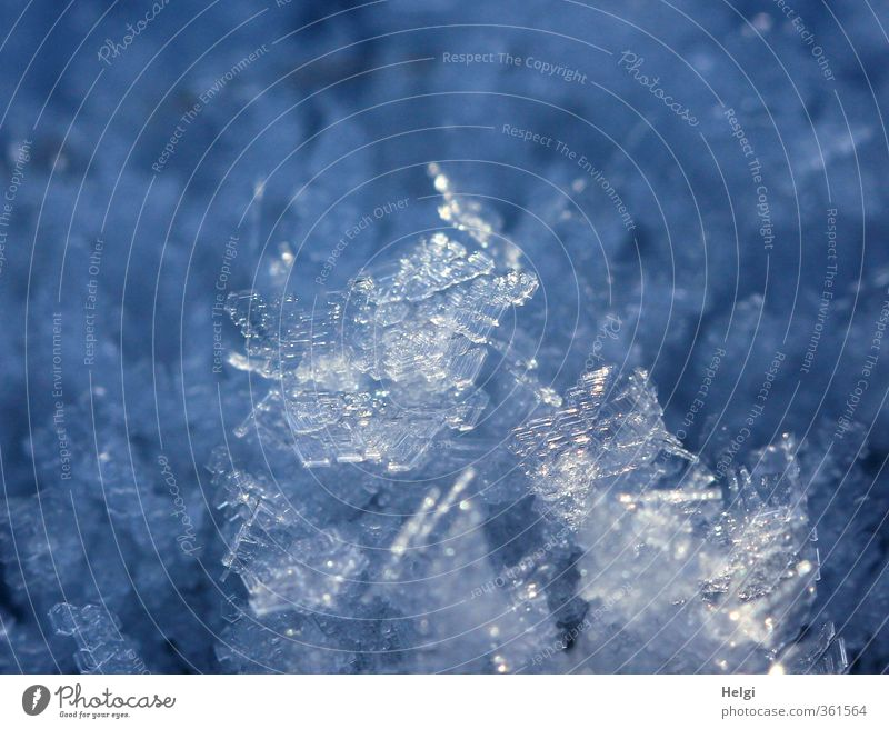 small refreshment... Nature Winter Ice Frost Snow Esthetic Exceptional Cool (slang) Glittering Beautiful Uniqueness Cold Small Natural Blue White Unwavering