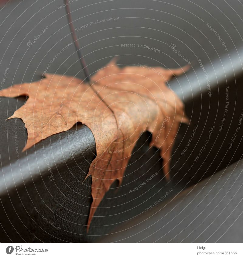 Nature Plant Calm Leaf Environment Life Autumn Natural Exceptional Lie Metal Moody Brown Authentic Esthetic Transience