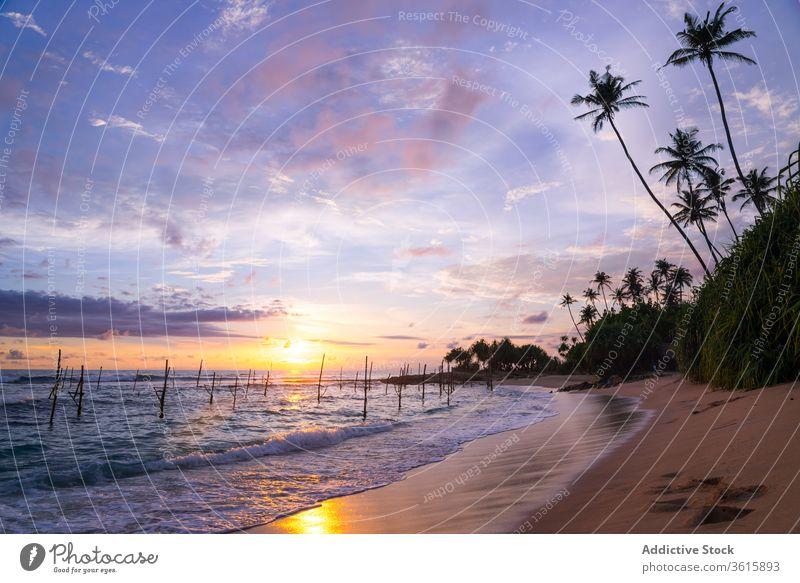 Spectacular sundown over sea on tropical beach sunset stilt stick amazing scenery coast palm fishing tradition spectacular nature sky ocean shore water summer