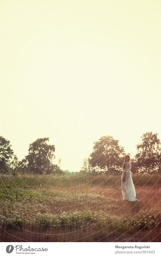 Sky Nature Summer Beautiful Landscape Forest Warmth Autumn Meadow Grass Fashion Orange Field Bushes Stand Longing