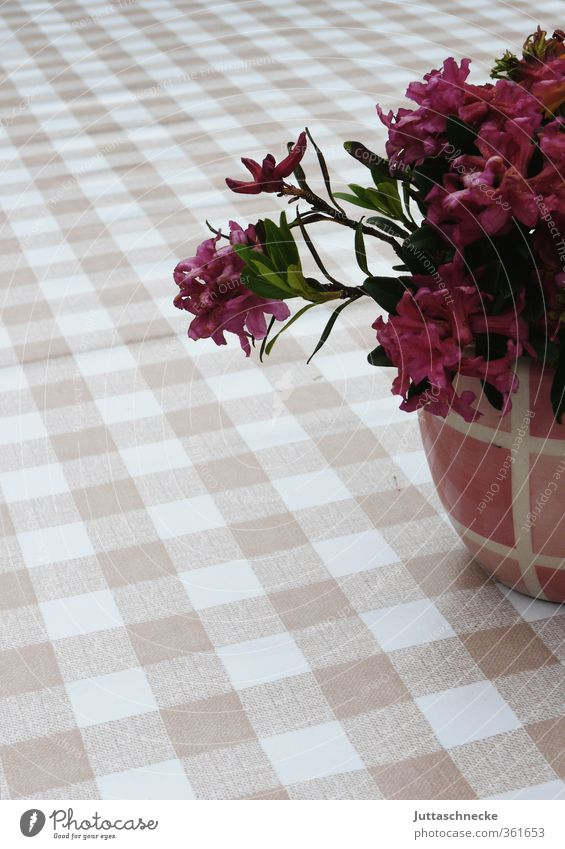 flowers Table Tablecloth Summer Plant Leaf Blossom Pot plant Flowerpot Blossoming Fragrance Beautiful Pink Spring fever Calm Contentment Relaxation Peace