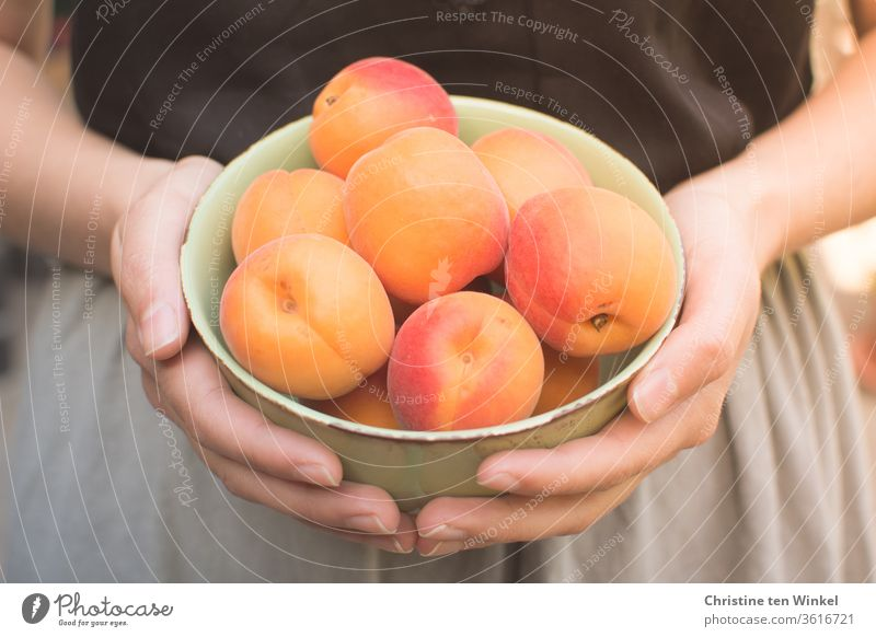 young woman holding a bowl of fresh apricots in front of her Apricots Summer fruit Juicy Fresh Vitamin Healthy Eating Young woman by hand To enjoy Nutrition