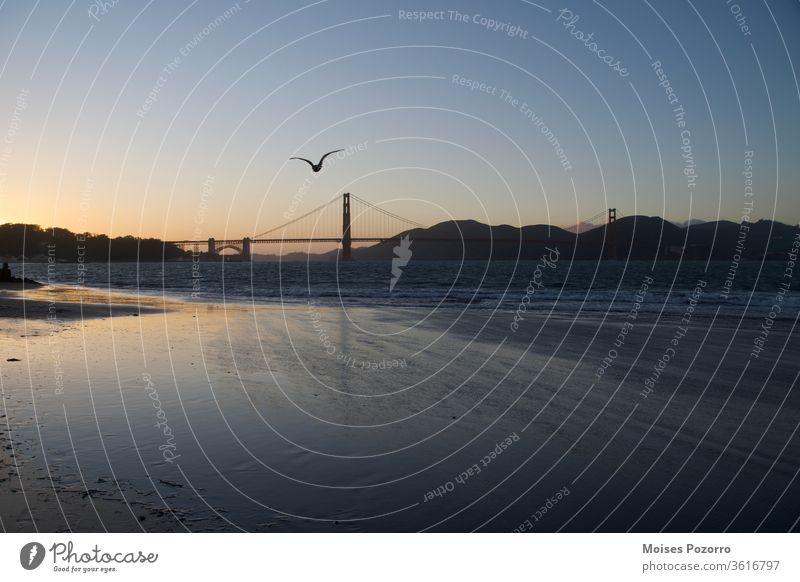 Seagull flying towards the Golden Gate Bridge during sunset in San Francisco Sunrise Twilight Dawn Exterior shot Colour photo Water USA touristic Tourist Sunset