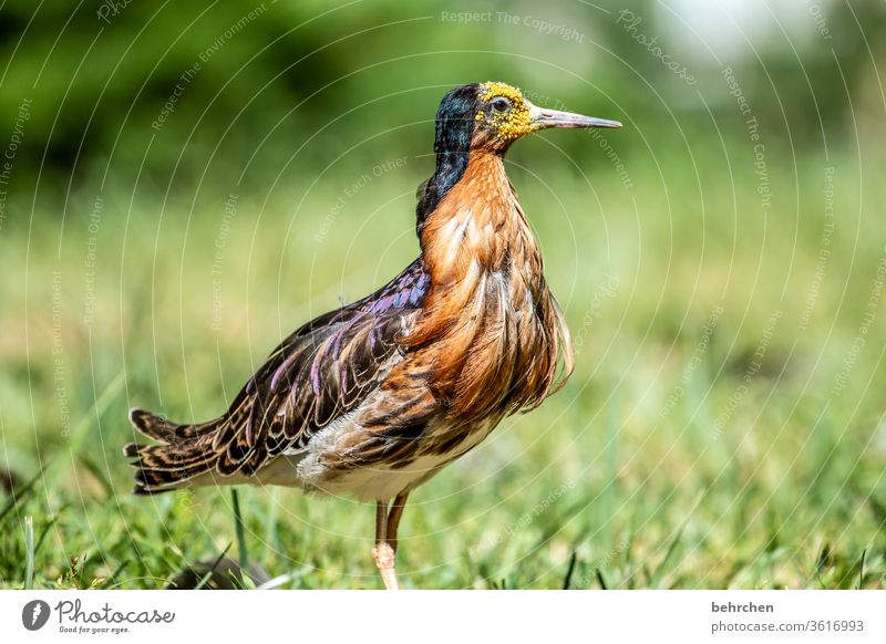 am I not magnificent?! Feather Contrast Nature Animal Wild animal birds Grand piano Animal face Beak Exceptional Elegant Exotic Fantastic already Colour photo
